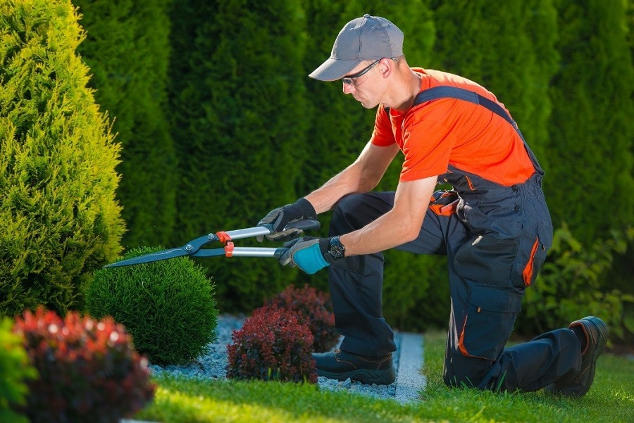Landscaping Clean Up